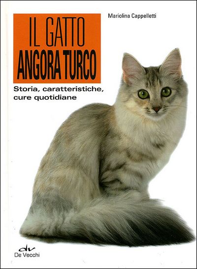 Il gatto angora turco