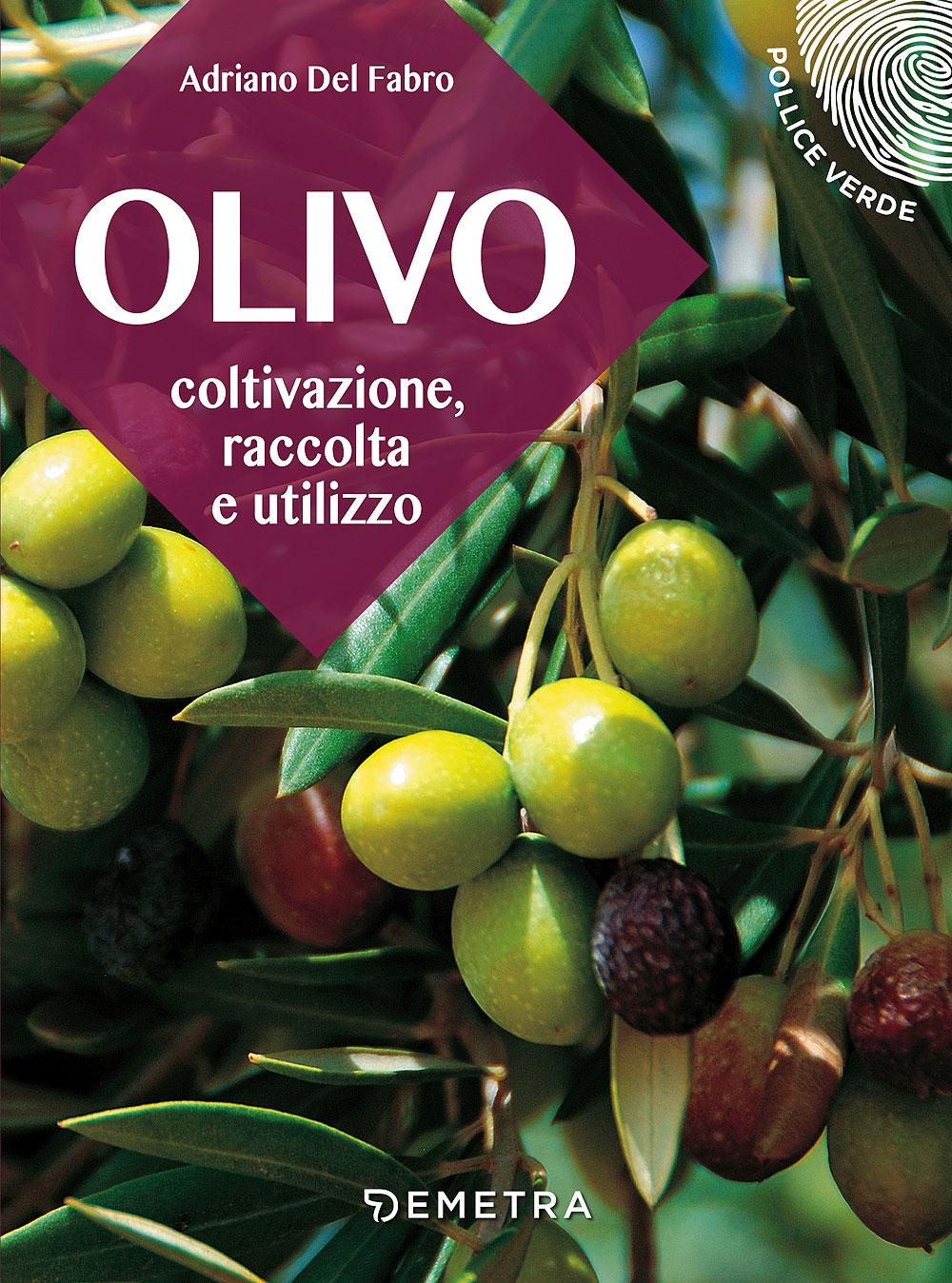 L'olivo