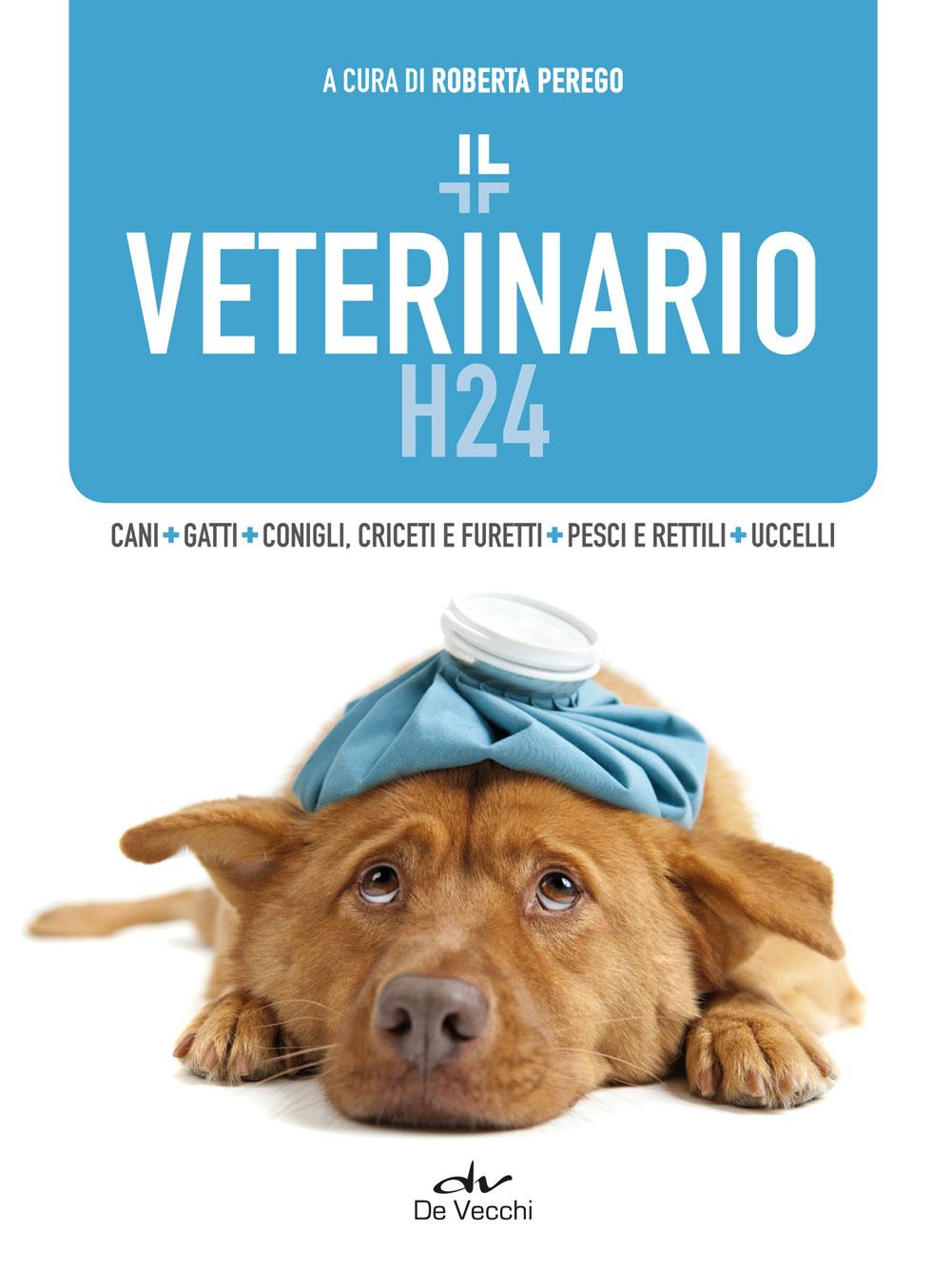 Veterinario H24