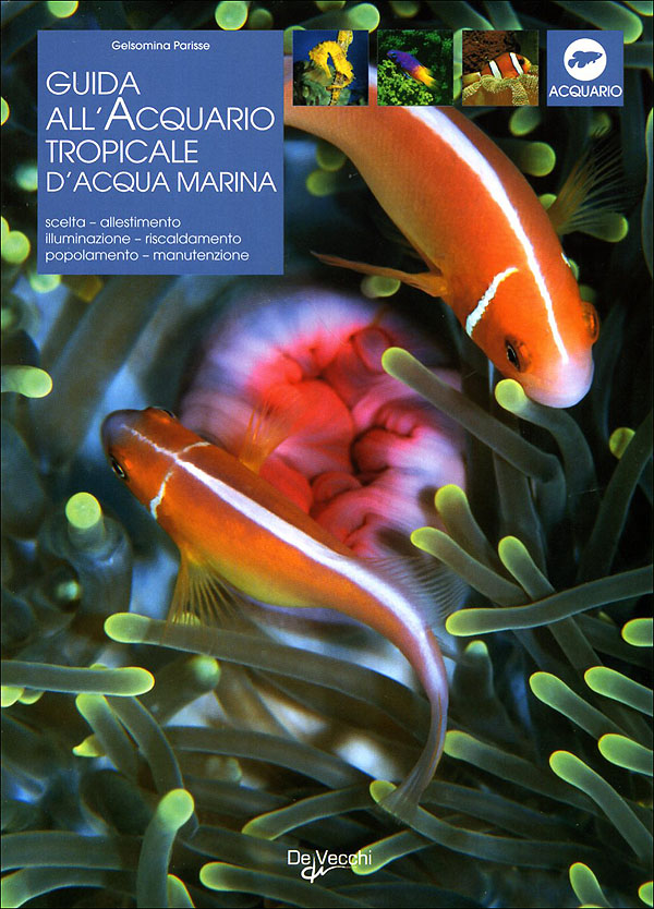 Guida all'acquario tropicale d'acqua marina